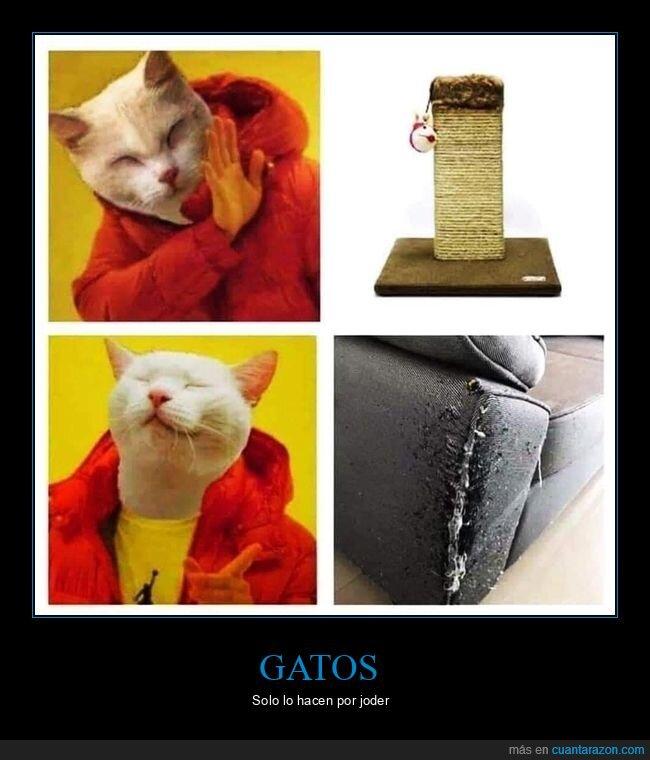 arañar,gato,rascador,sofá