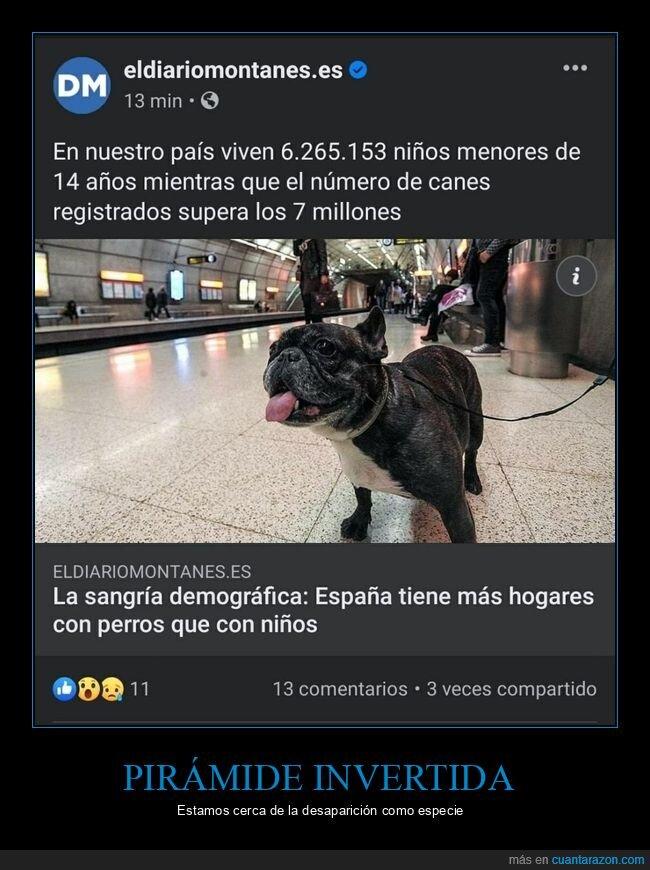 cantidad,mascotas,niños,perros