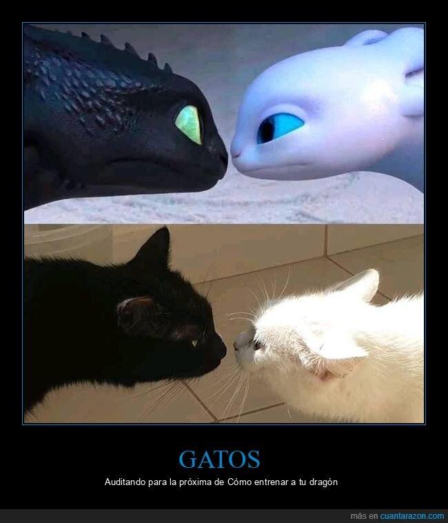 dragones,gatos,parecidos razonables