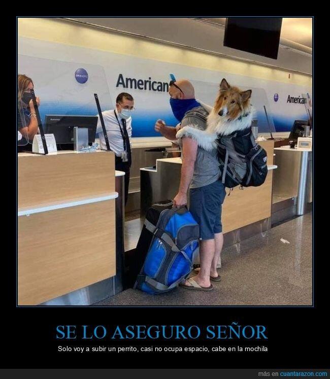 equipaje,lassie,perro