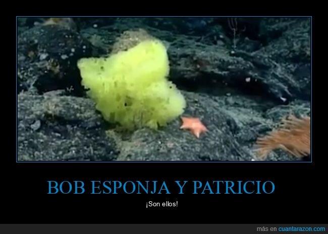 bob esponja,de verdad,patricio,real life