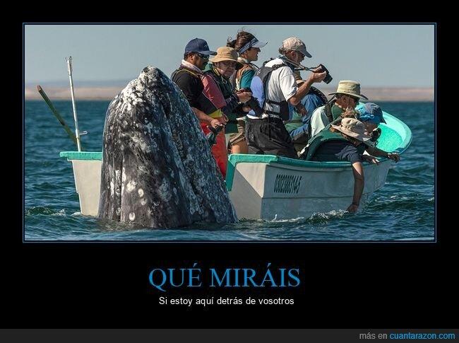 ballena,barca,buscar,observar