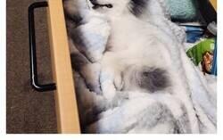 Enlace a Veterinarios que se encontraron con mascotas adorables del mundo y tuvieron que hacerles una foto