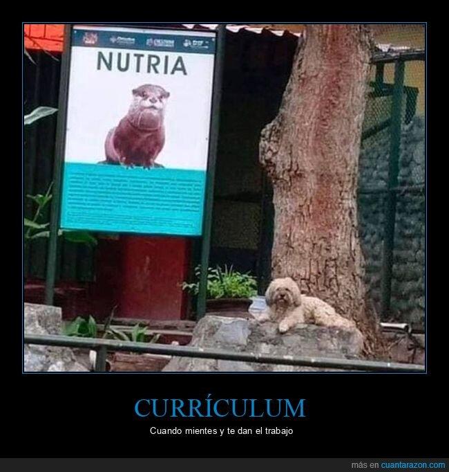 currículum,mentir,nutria,perro,trabajo,zoo