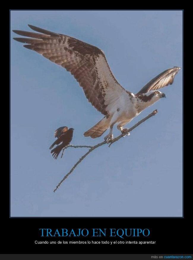 pájaros,rama,wtf