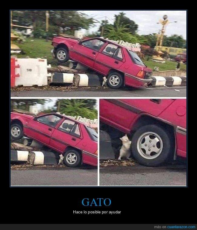 accidente,coche,gato