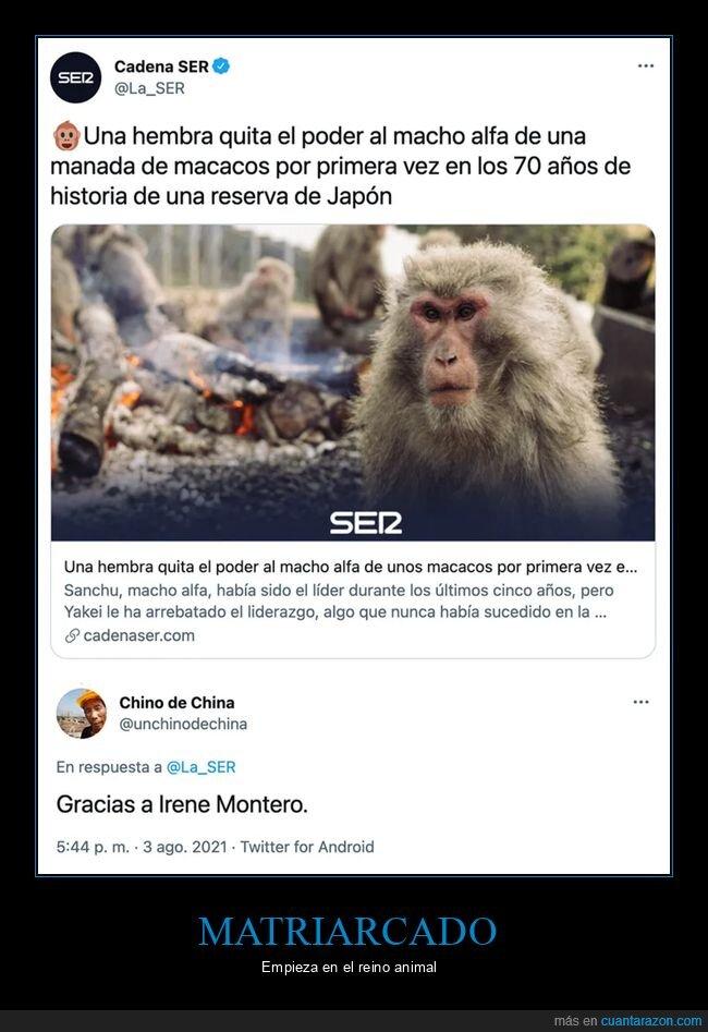 hembra,macacos,macho alfa,monos,poder