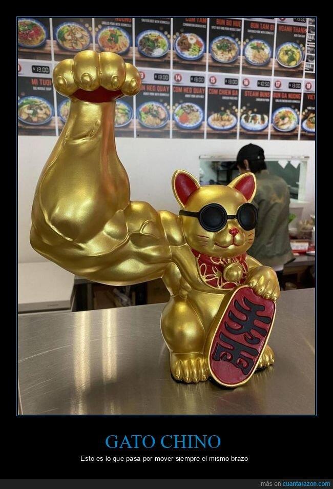 brazo,gato chino