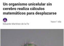 Enlace a No le hace falta cerebro para saber matemáticas