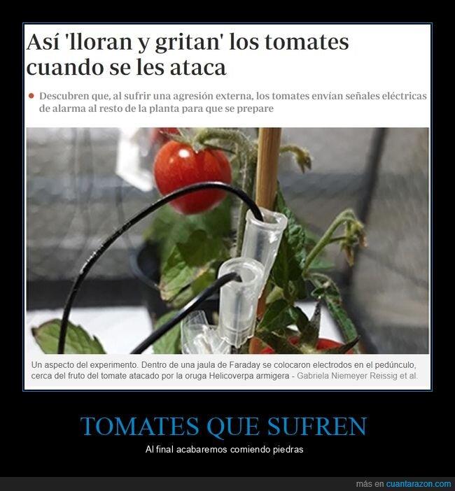 gritar,llorar,tomates