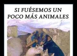 Enlace a Animales muy humanos