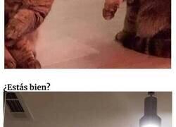 Enlace a Gatos que actúan como tontos cuando creen que nadie les está mirando
