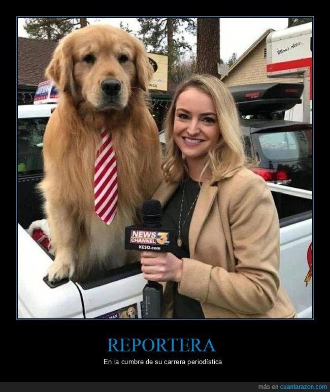 perro,reportera
