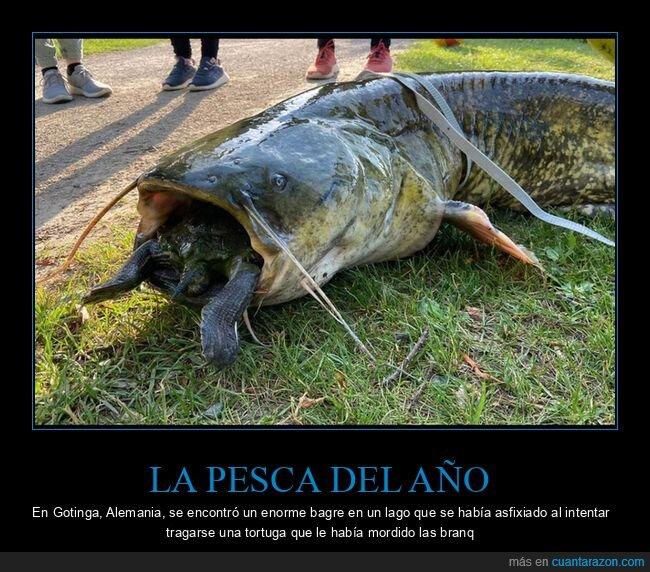 pez,tortuga,wtf