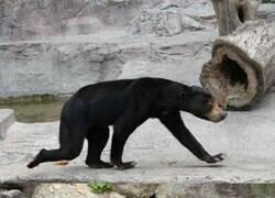Enlace a Un oso que parece de mentira