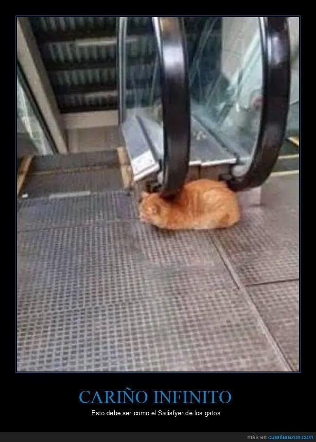 cariño,escaleras mecánicas,gatos,infinito