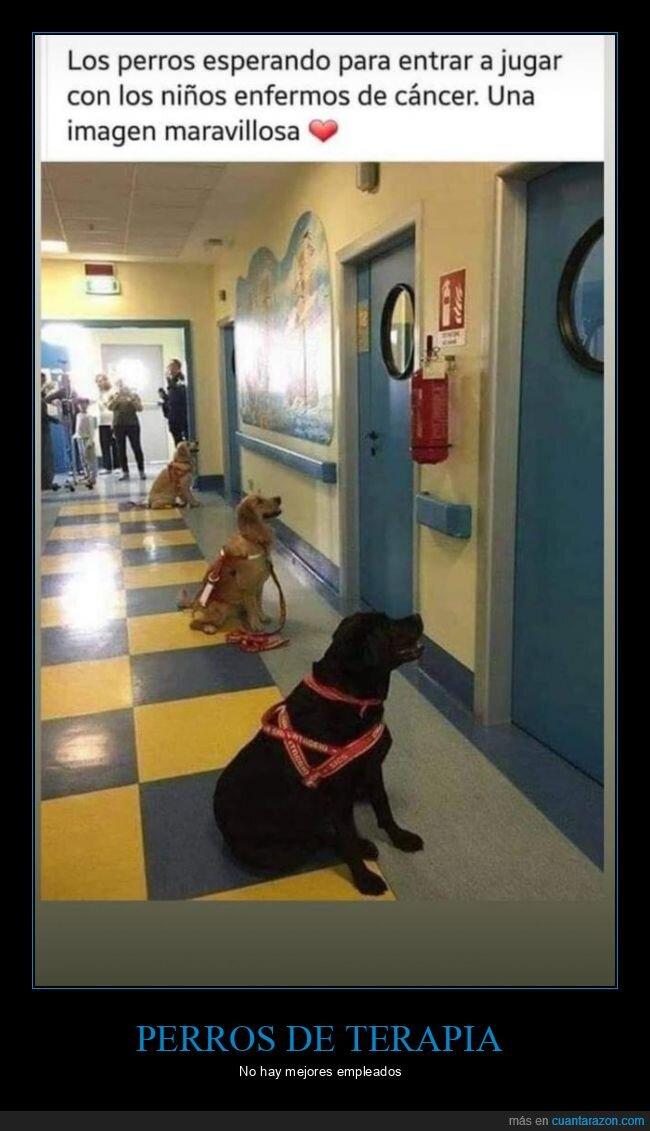 cáncer,esperandomjugar,niños,perros,terapia