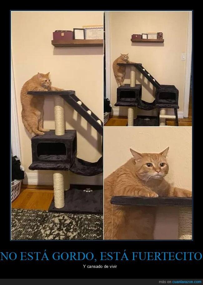gato,gordo