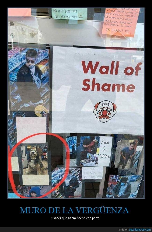 ladrones,perro,tienda
