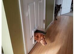 Enlace a Perros que olvidaron cómo ser perros y se creen gatos