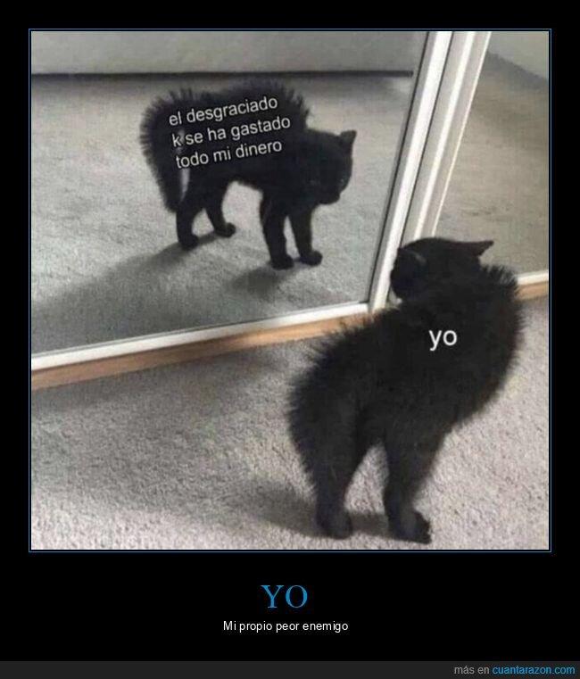 dinero,espejo,gastar,gato