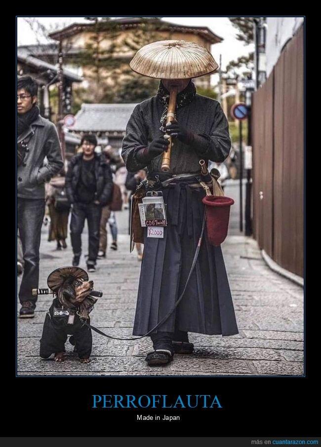 flauta,japón,perros