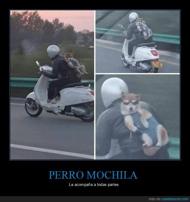 moto,perro,wtf