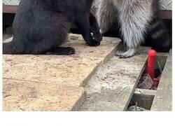 Enlace a Fotos divertidas y extravagantes de mapaches