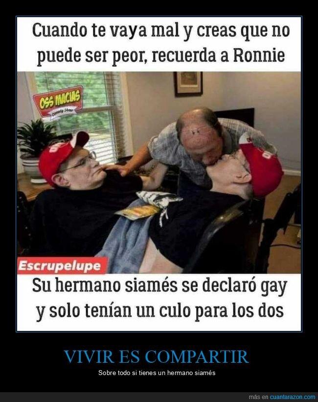 gay,siameses