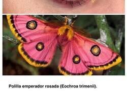 Enlace a Mostrando la belleza de los insectos a través de distintos estilos de maquillaje de ojos a juego