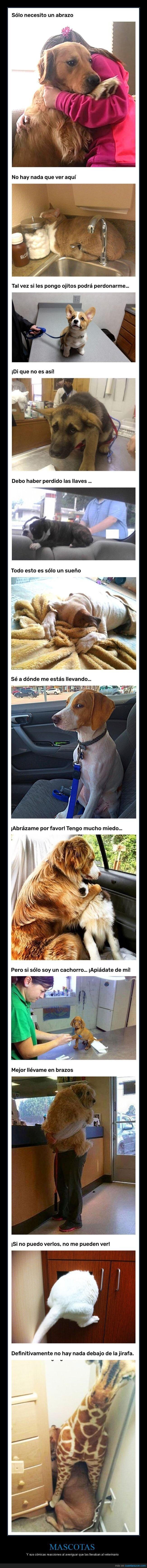 mascotas,reacciones,veterinario