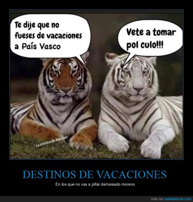 blanco,país vasco,tigres,vacaciones