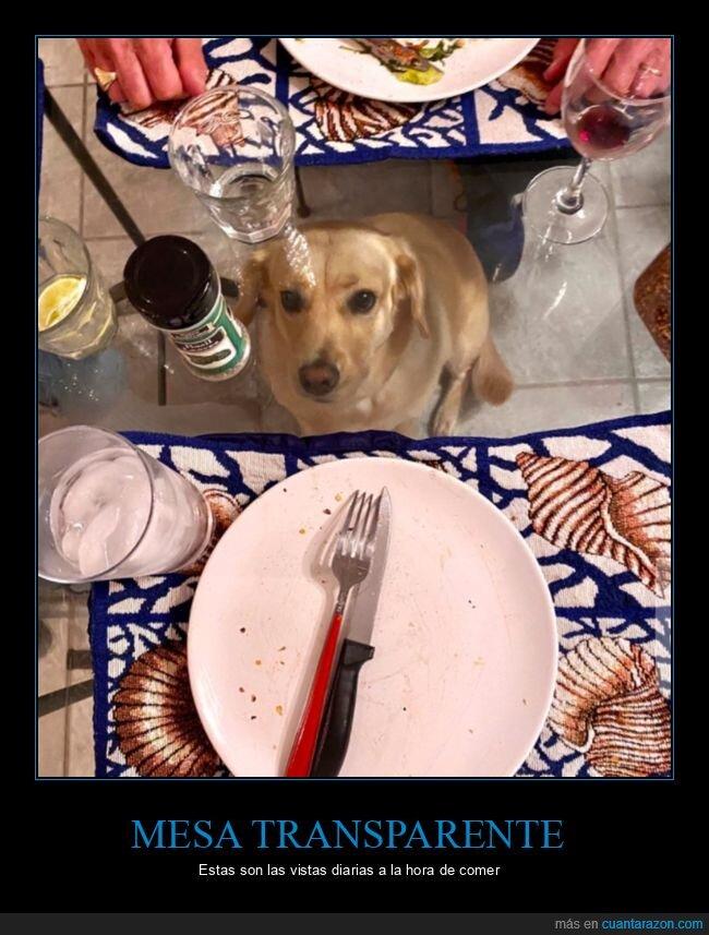 mesa,perro,transparente