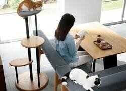 Enlace a La mesa que tu gato quiere que compres