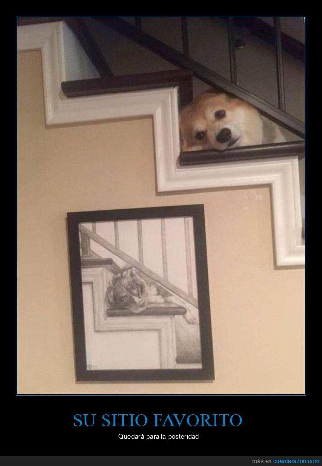 dibujo,escaleras,perro,sitio