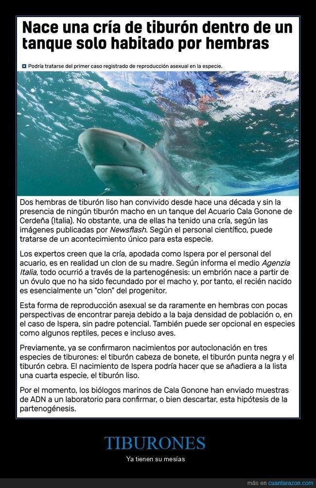 hembras,nacer,tiburón