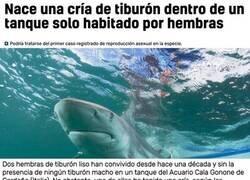 Enlace a Ha nacido el mesías de los tiburones
