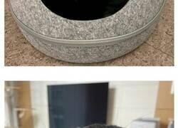 Enlace a MeonJi, un gato negro extrañamente adorable