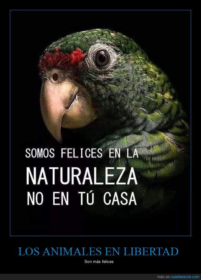 animales,cautiverio,libertad