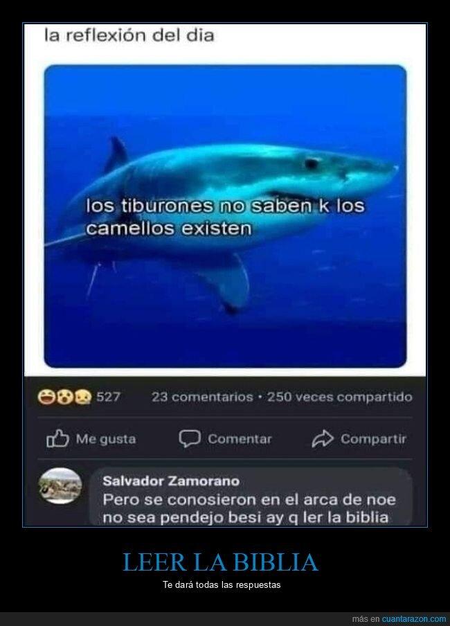arca,camellos,existir,tiburones