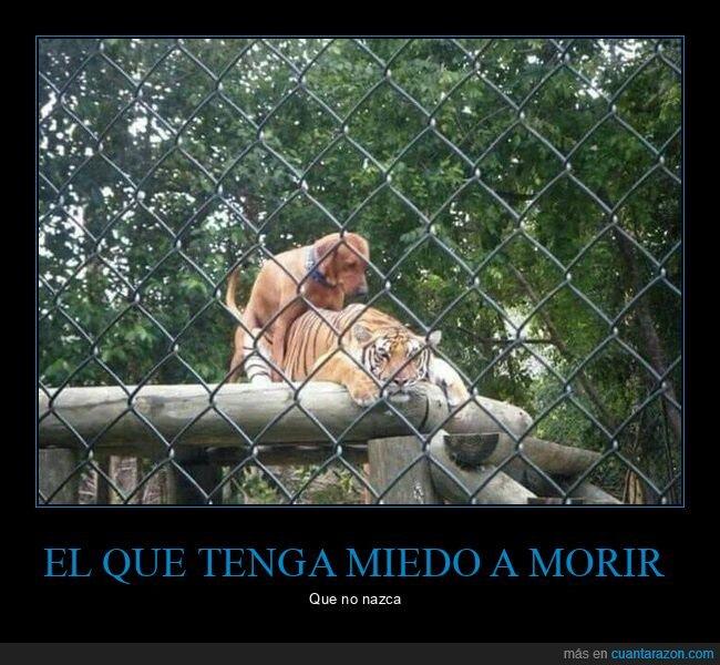 perro,tigre,wtf