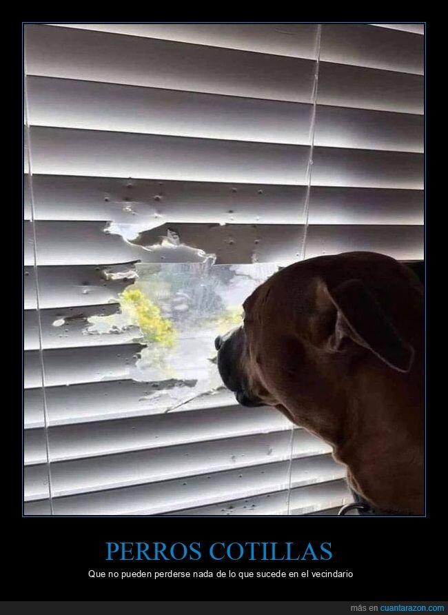 perro,ventana,wtf