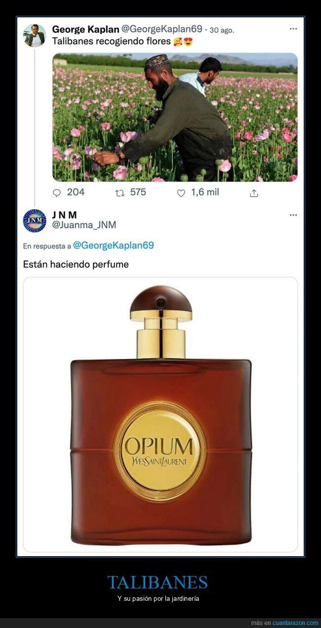 amapolas,flores,opio,opium,perfume,recogiendo,talibanes