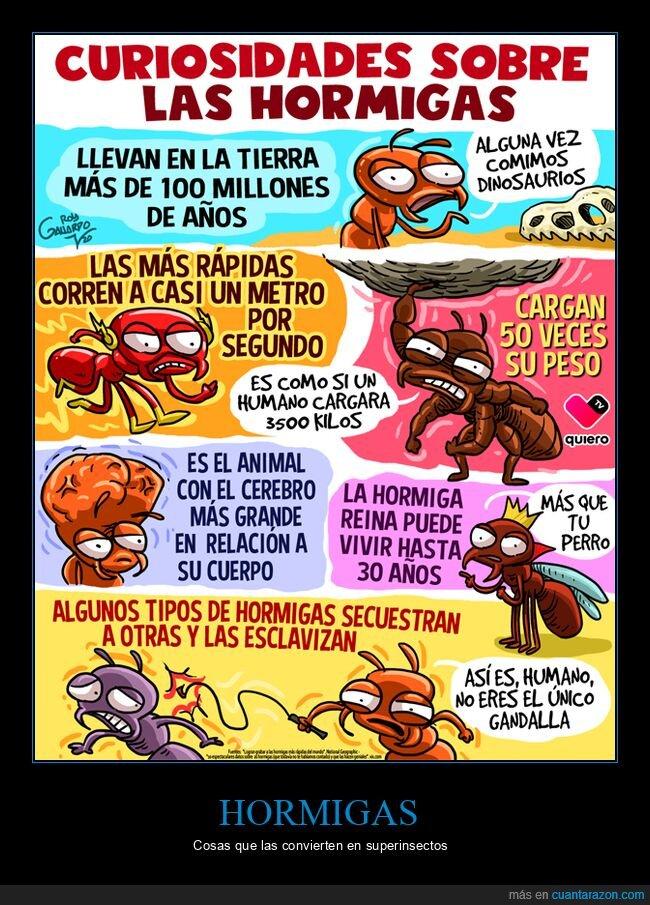 curiosidades,hormigas