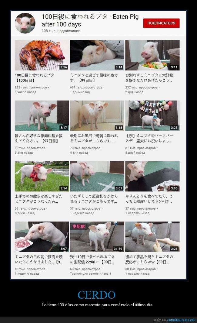 cerdo,comer,mascota,wtf