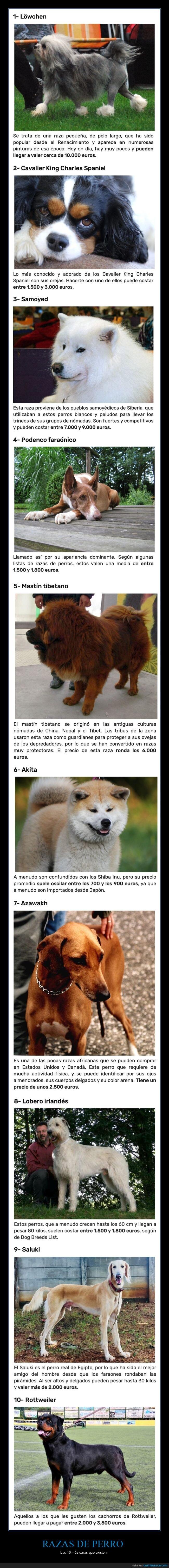 caras,perros,razas