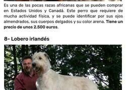 Enlace a Las 10 razas de perro más caras que existen