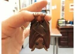 Enlace a Fotos de animales en miniatura posando sobre dedos