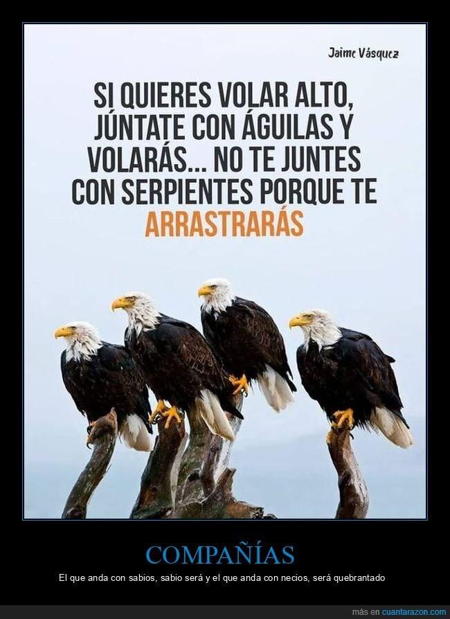 águilas,arrastrarse,compañías,serpientes,volar