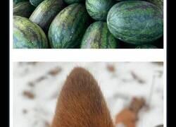 Enlace a Fotos de animales que no tienen ningún sentido